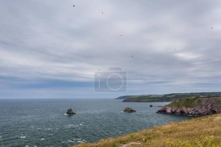 Berry Head, The South West Coast Path, Devon, UK