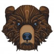 Muzzle bear illustration for creating sketches of ...