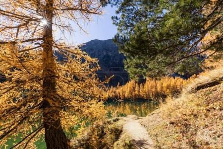 Photo pour Superbe vue sur le Palpuogna lac près Albula passer avec arbres d'or à l'automne, Canton des Grisons, Suisse - image libre de droit