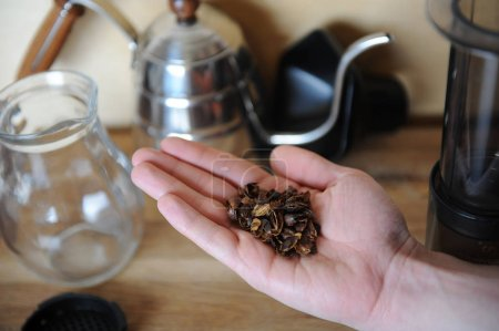 A handful of dried coffee berries cascara on the palm. Drip Coffee Maker, glass jug server in the background