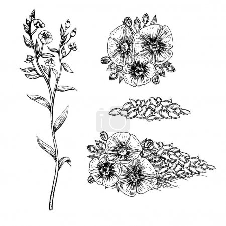 Illustration for Hand drawn flax flowers and seeds. Pattern in vintage style. Black and white retro bouquet. Drawing line sketch. Can be used in package design. Vector illustration. - Royalty Free Image