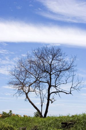 Lonely Tree outdoor