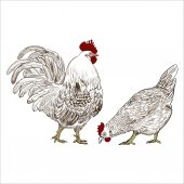 Vector illustration of rooster symbol of 2017 on the Chinese calendar Use printed materials signs items websites maps posters postcards packaging
