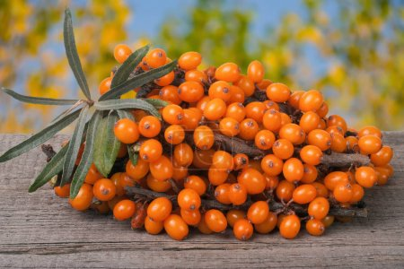 Sea buckthorn branch on a wooden table with blurre...