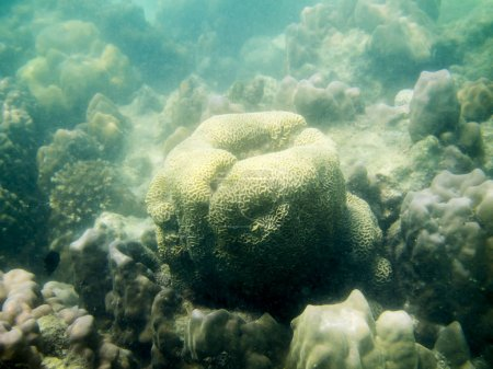 coral reef in tropical sea