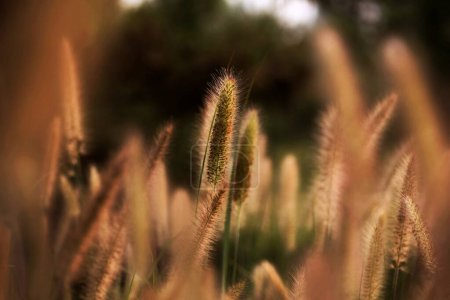 Photo for Beautiful botanical shot, natural wallpaper - Royalty Free Image