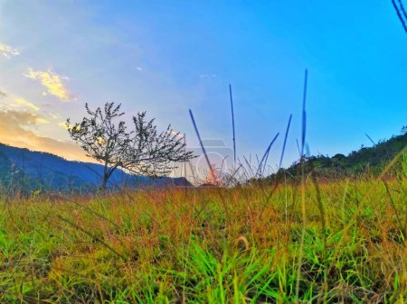 Photo for Beautiful landscape with a tree and a mountain - Royalty Free Image