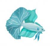 Betta bellica Aquarium vector fish with a big tail