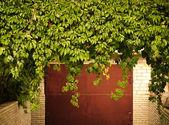 Green grape leaves above old garage door as frame, vintage style