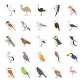 Birds color vector icons