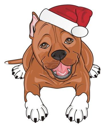 Photo pour Genre pitbull dans le chapeau de Noël rouge située - image libre de droit