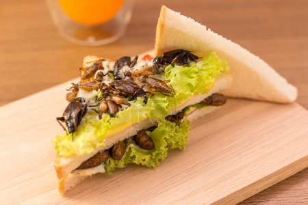 Photo for Sandwich made of fried insect meat and mozzarella cheese, mayonnaise and tomato, lettuce with orange juice presented on a wooden board. Close-up, Select focus - Royalty Free Image