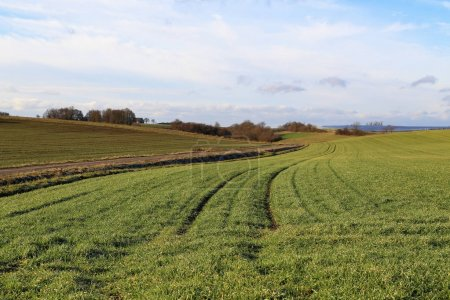 Photo for Rural landscape / Fields and meadows / Winter crops - Royalty Free Image