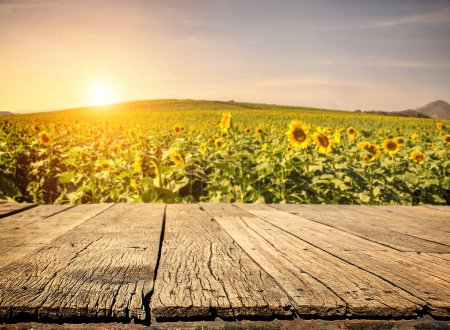 Photo for Empty wooden plank with Sunflower field background - Royalty Free Image