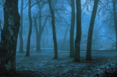 Trees in the fog on an early autumn morning. Trees, fog in the park. Fog in the forest. Autumn gloomy background.