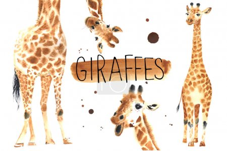 Set of Realistic giraffes