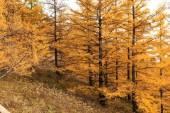 Inner Mongolia arshaan autumn scenery