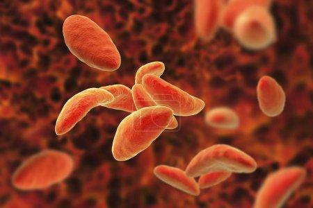 Parasitic protozoans Toxoplasma gondii