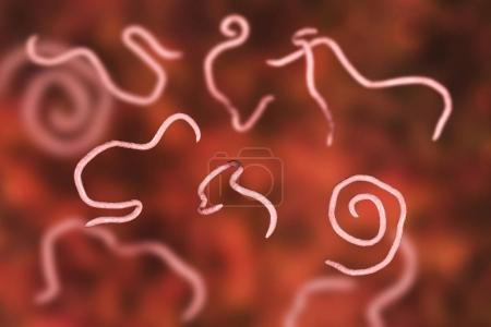 Photo pour Helminthes nématodes Enterobius Threadworm qui causent l'entérobiase, illustration 3D - image libre de droit