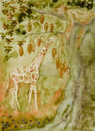 Photo pour Lionne dormant dans un baobab avec une girafe mangeuse. La technique de tamponnage près des bords donne un effet de mise au point doux en raison de la rugosité de surface modifiée du papier . - image libre de droit