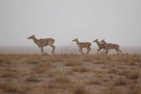 Wild donkeys in the desert