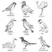 Hand draw vector birds set