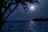Night landscape. Beach by the sea with tree and full moon., the moonlit ocean at night with waves and water reflection.