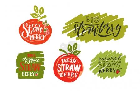 Illustration for Hand sketched strawberry lettering typography over white background. Logo templates for farmers market, organic food, natural product design, juice, pie, jam - Royalty Free Image