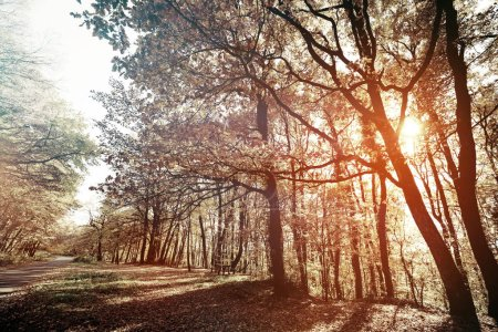 Hermoso paisaje forestal