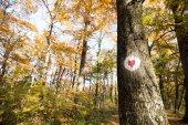 Schutz von Bäumen und Umgebung