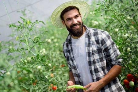 Attractive happy male farmer working in his greenhouse
