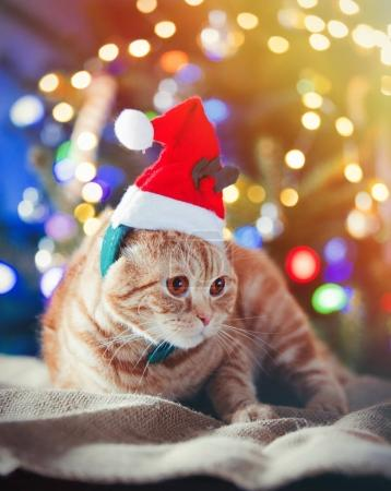 Little kitty in costume at Christmas time.