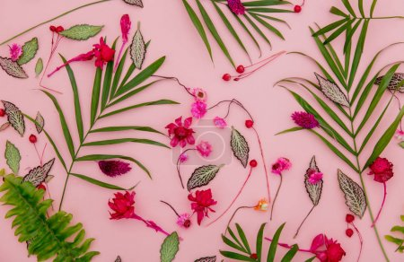 Above view at plant leaves and flowers on pink background