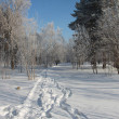 Trodden path in snow-covered Siberian park...