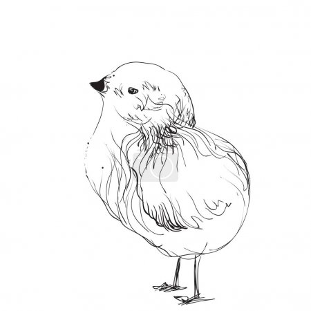 Hand-drawn pencil graphics, chicken, chick.