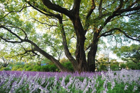 Big tree and lilac flowers