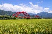 bridge on green rice field
