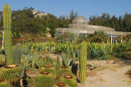 Cactus plants in fujian desert garden