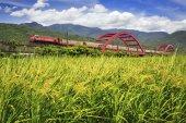 red Huang kecheng iron bridge with train near green field in taiwan