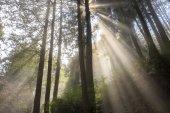 beautiful landscape of sunlight in green forest in taiwan