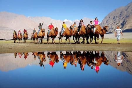 Camel Riding, Nubra Valley, Leh Ladakh