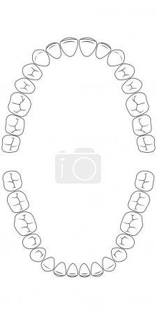 Tooth chart teeth, the chewing side of the teeth o...