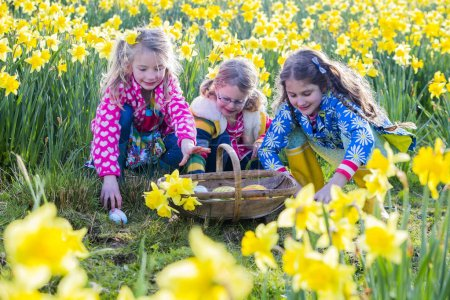 Photo for Three little girls are doing an easter egg hunt in a field of daffodils. - Royalty Free Image