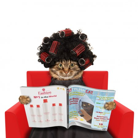 Funny cat at beauty salon