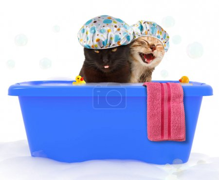 Two funny cats are taking a bath in a colorful bathtub with toy duck.