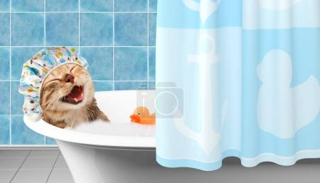 Funny cat is taking a bath with toy duck.