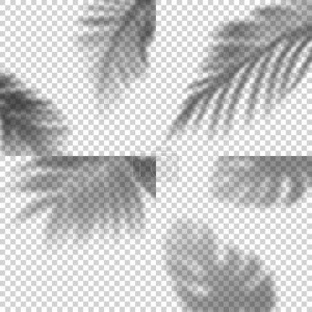 Illustration pour Ensemble décoratif d'ombres transparentes de feuilles. Éléments de conception vectorielle pour collages. Effet de superposition créatif pour les maquettes - image libre de droit