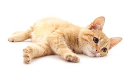 Little kitten isolated.
