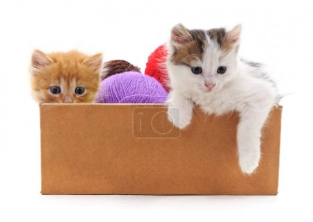 Kittens and colorful balls in the box isolated on ...