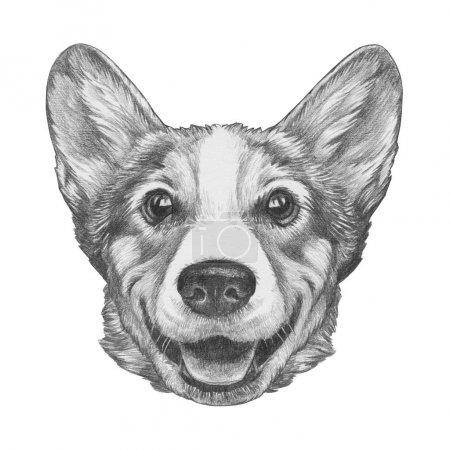 Photo pour Portrait de la belle esquisse de chien Welsh Corgi, isolé sur blanc - image libre de droit